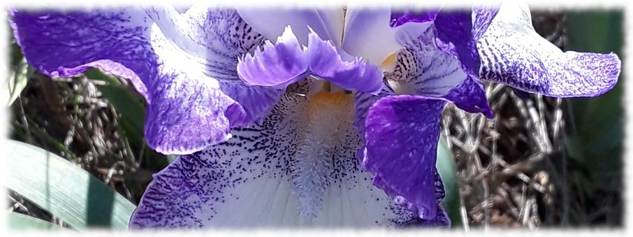 in the Iris