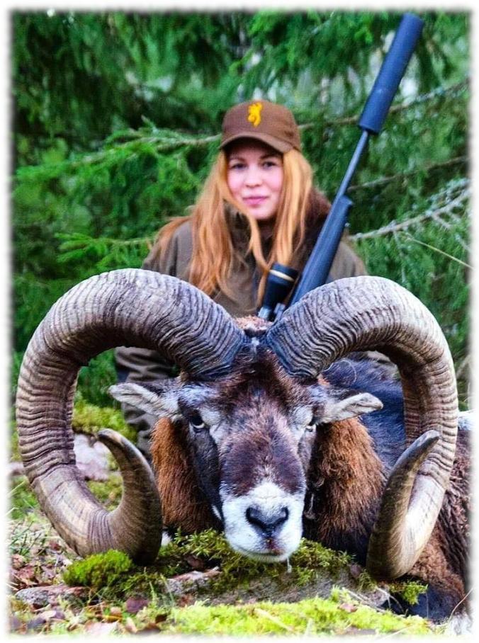 Mouflon murdering mama